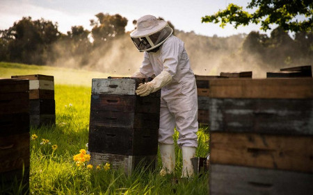 beekeeping raw honey